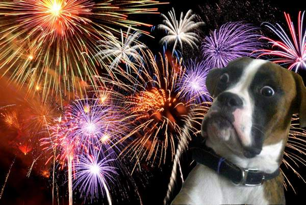 A dog with fireworks in the background Description automatically generated with low confidence